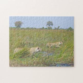 Stalking Lions Puzzle