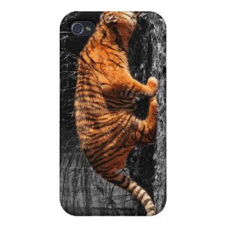 Stalking Tiger Cub - iPhone 4 Case