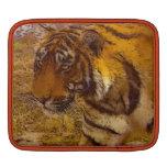 Stalking Tiger Wildlife Fine Art iPad Sleeve