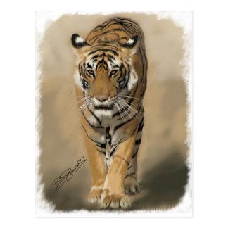 Stalking Tigress Postcard