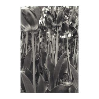 Stalking Tulips Canvas Print