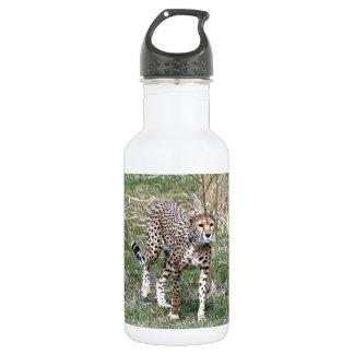 Stalking Water Bottle