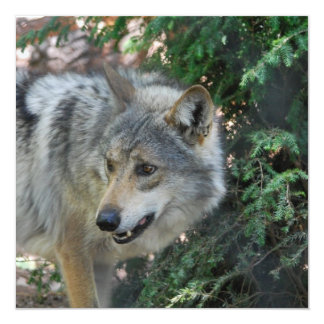 Stalking Wolf Invitations