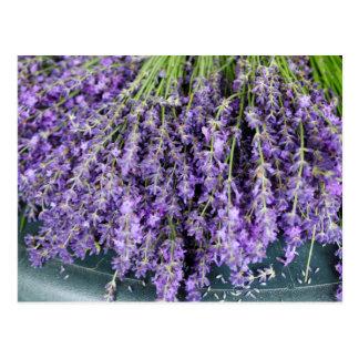 Stalks of Lavender Postcard