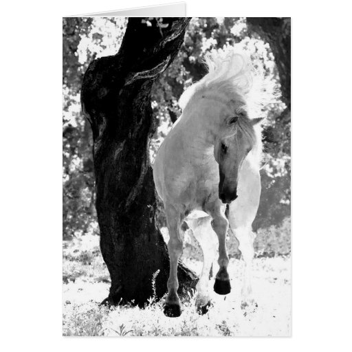 Stallion Dances Horse Greeting Card