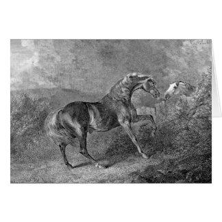 Stallion Horse Vintage Illustration Card