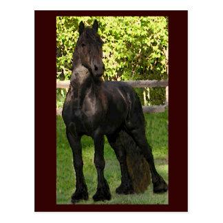 Stallion Painting Postcards