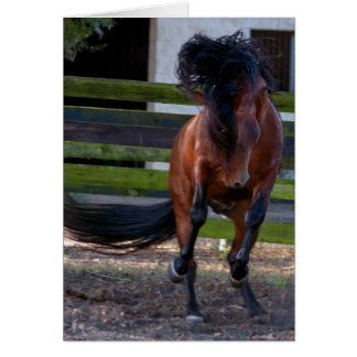 Stallion Play Card