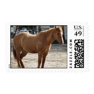 Stallion Postage Stamp