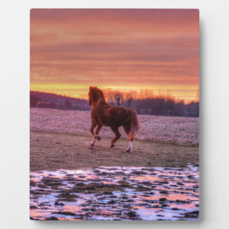 Stallion Running Home at Sunset on Ranch Display Plaque