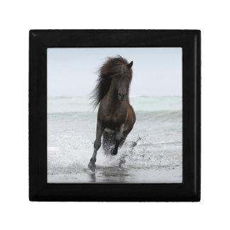 Stallion Running On Beach | North Atlantic Gift Box