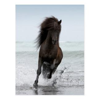 Stallion Running On Beach   North Atlantic Postcard
