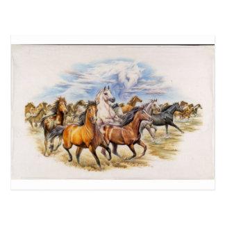 Stallion Stampede Postcard
