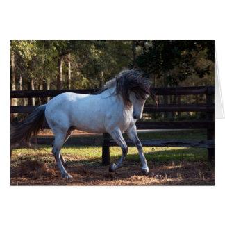 Stallion Strut Card