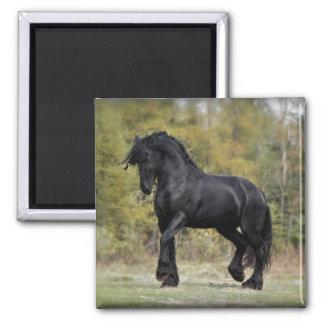 Stallion Strut Magnets
