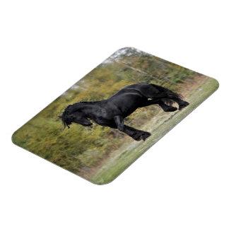 Stallion Strut Vinyl Magnets