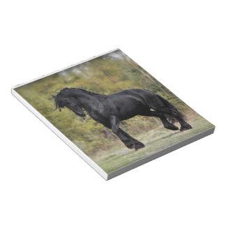 Stallion Strut Scratch Pads