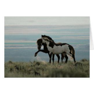 Stallions on the High Desert Greeting Card