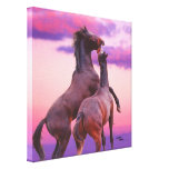 Stallions playing sunrise Stretched Canvas Print