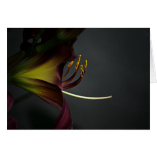 Stamen - A Notecard or All Occasion