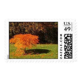 Stamford, Ct  $B.A.K.$ Original Stamp