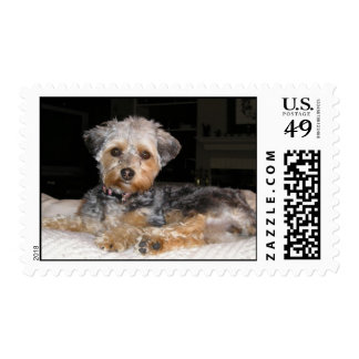 stamp2, Yorkiepoo Postage