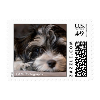 stamp, C&M Photography Postage Stamp