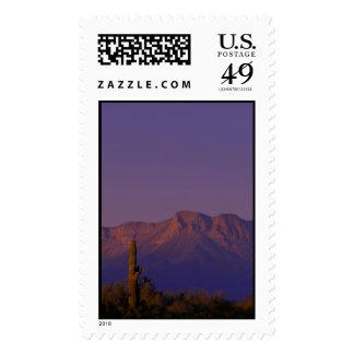 Stamp / Cabeza Prieta NWR, Arizona