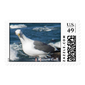 Stamp:  Looking Gull Postage Stamp