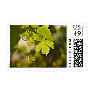 Stamp: Mediterranean Grape Vine Postage