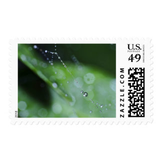 Stamp: Moment in the Forest Postage