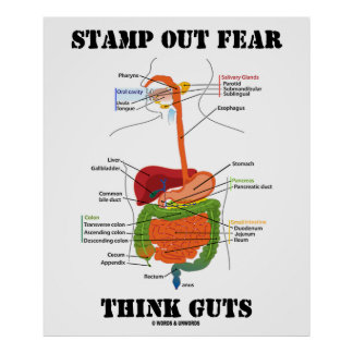 Stamp Out Fear Think Guts Digestive System Humor Posters