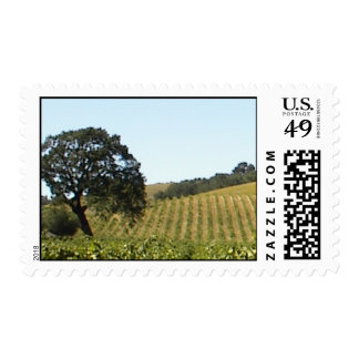 Stamp: Paso Robles Vineyard in August Postage Stamp