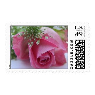 Stamp: Pink rose Postage