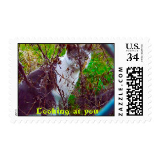 Stamp, US postage Stamp, Cat, Kitty, Cat in garden