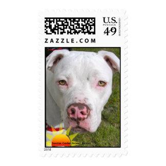 Stamp with Casper