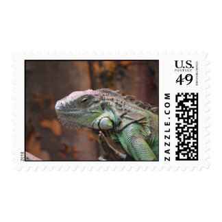 Stamp with colourful Iguana lizard