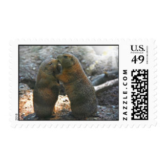 Stamp  with cute marmot couple