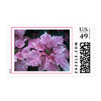 Stamp with pink poinsettia for holiday greetings