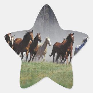 Stampede Star Sticker