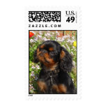 Stamps English toy spaniel / king charles
