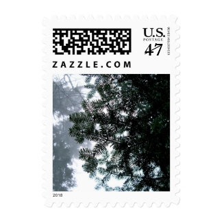 Stamps - Evergreen Bough