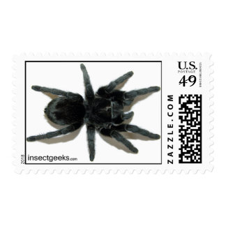 Stamps - Grammostola pulchra