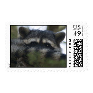 Stamps: Raccoon