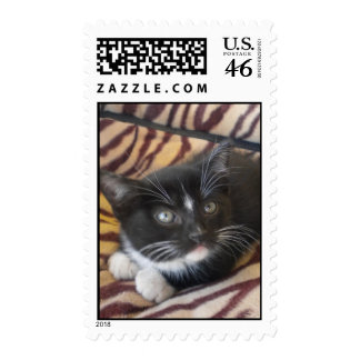 stamps tiger cat