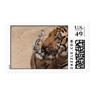 Stamps - Tigers from Thailand Temple