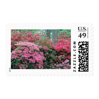 Stamps with an Explosion of spring color