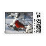 Stan the Cardinal Postage