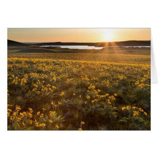 Stand Of Arrowleaf Balsamroot Wildflowers Greeting Card