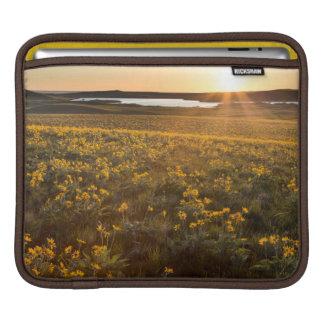 Stand Of Arrowleaf Balsamroot Wildflowers Sleeve For iPads